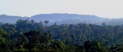 Amazon Rainforest, Southern Amazon