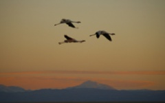 Flamingoes Atacama